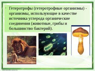 Гетеротрофы (гетеротрофные организмы) - организмы, использующие в качестве ис