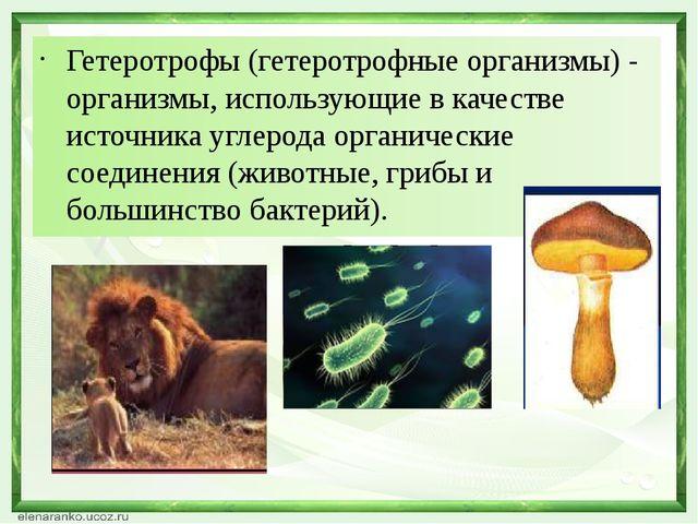 Гетеротрофы (гетеротрофные организмы) - организмы, использующие в качестве ис...