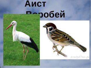 Аист Воробей