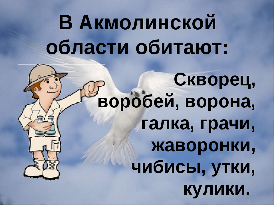 В Акмолинской области обитают: Скворец, воробей, ворона, галка, грачи, жаворо...