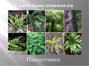 К какой группе относятся эти растения? Папоротники
