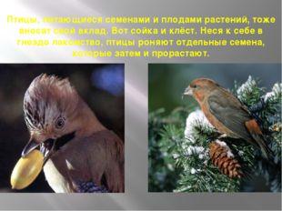 Птицы, питающиеся семенами и плодами растений, тоже вносят свой вклад. Вот со