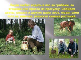 Люди любят ходить в лес за грибами, за ягодами или просто на прогулку. Собира