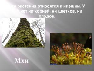 Эти растения относятся к низшим. У них нет ни корней, ни цветков, ни плодов.