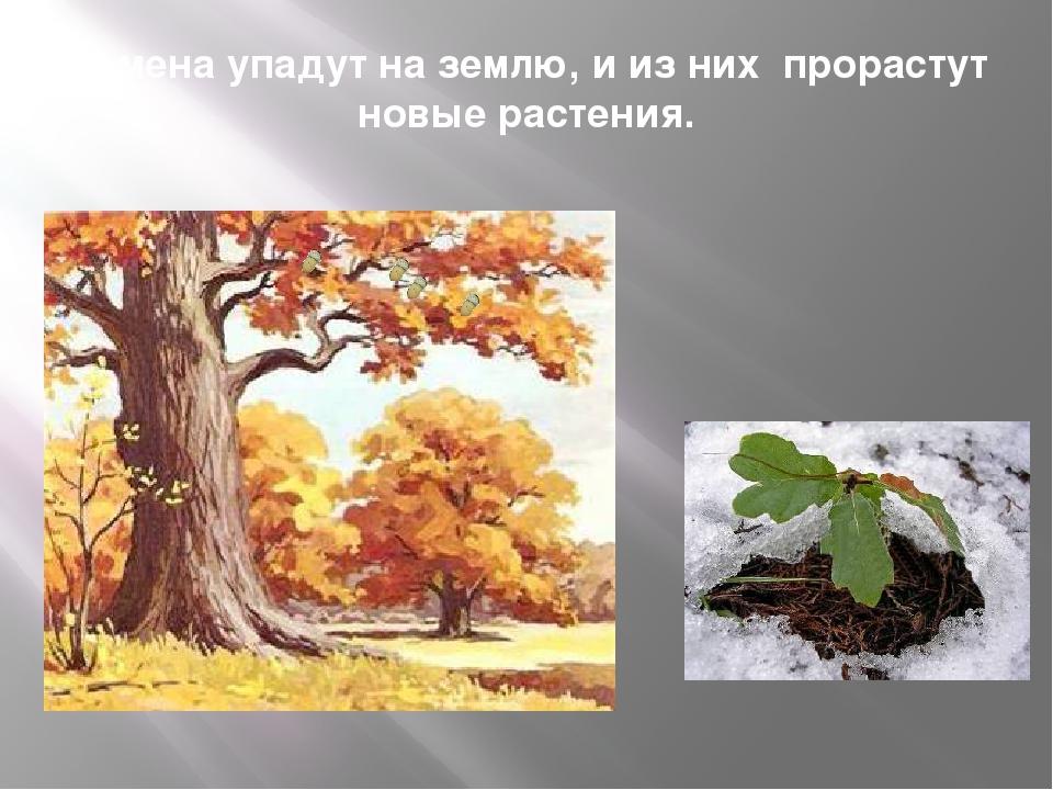 Семена упадут на землю, и из них прорастут новые растения.