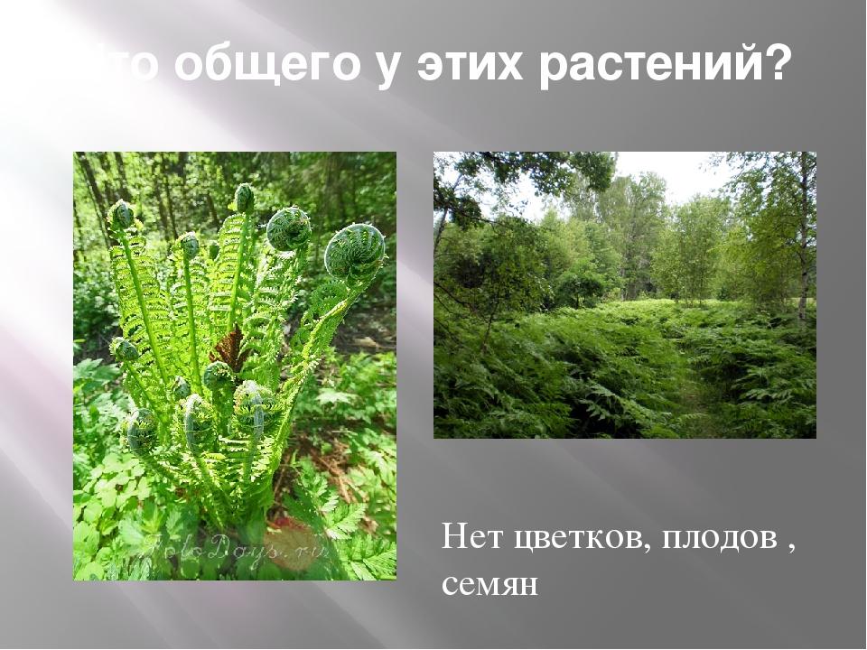 Что общего у этих растений? Нет цветков, плодов , семян