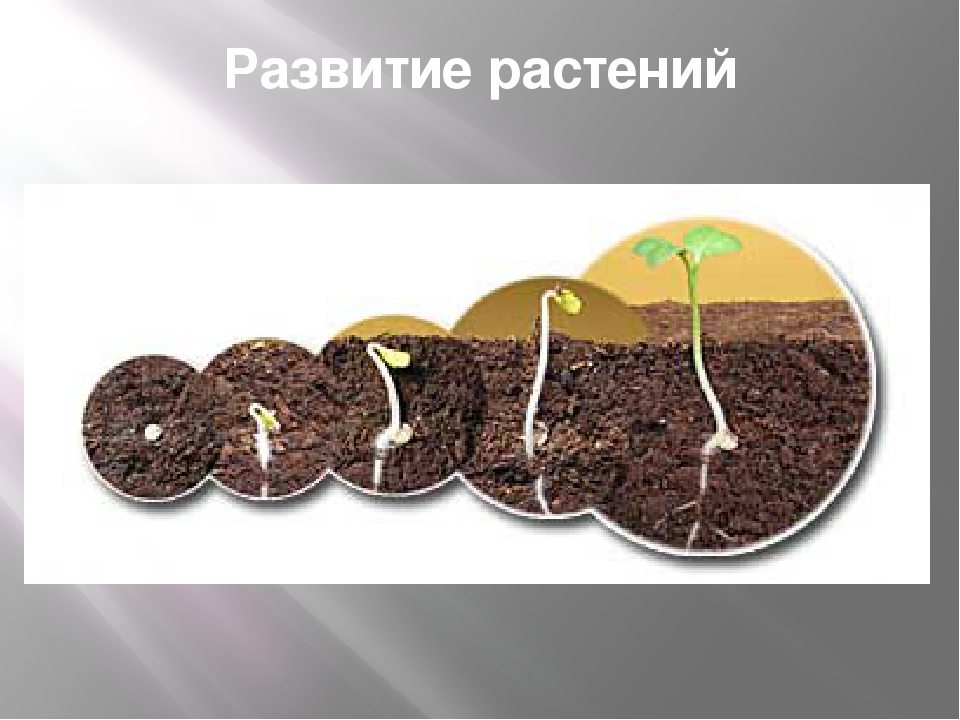 Развитие растений