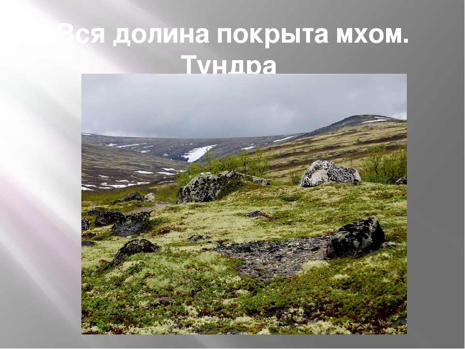 Вся долина покрыта мхом. Тундра