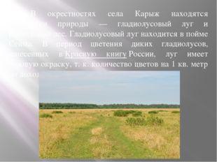 В окрестностях села Карыж находятся памятники природы — гладиолусовый луг