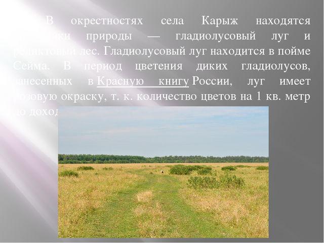В окрестностях села Карыж находятся памятники природы — гладиолусовый луг...