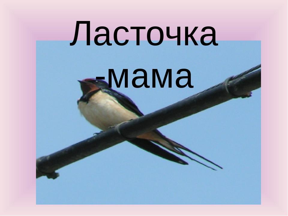 Ласточка -мама