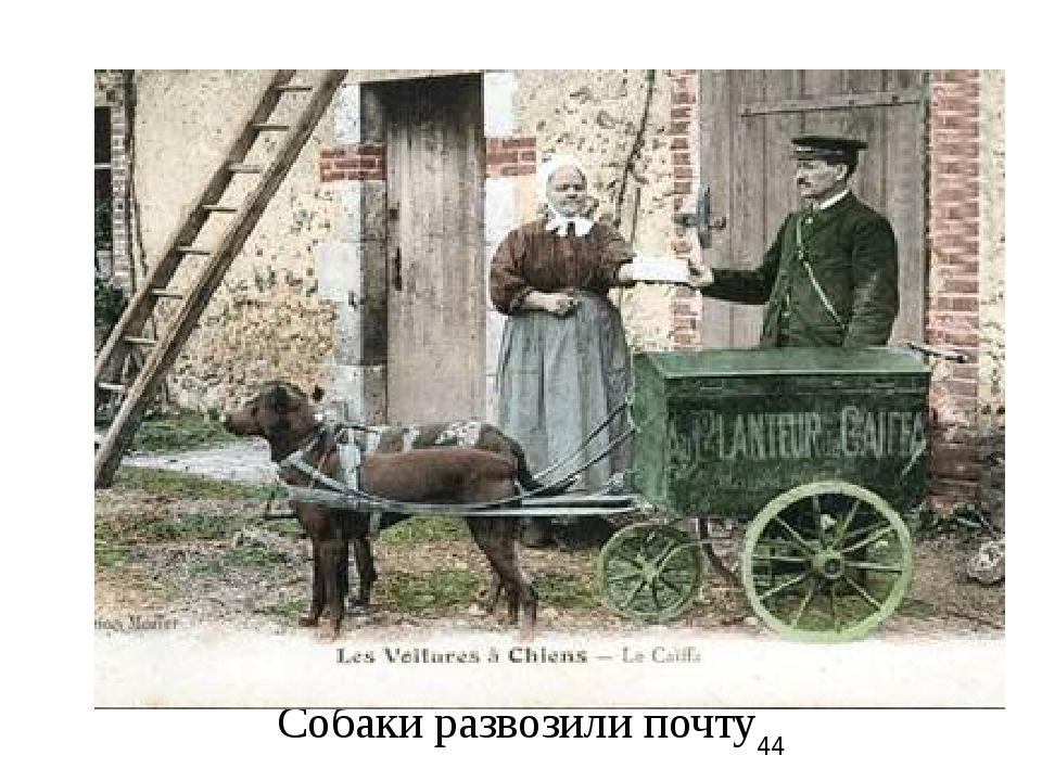 Собаки развозили почту