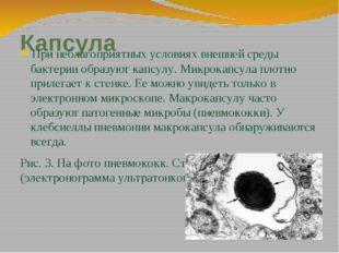 Капсула При неблагоприятных условиях внешней среды бактерии образуют капсулу.