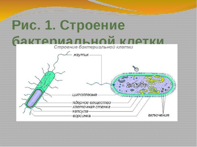 Рис. 1. Строение бактериальной клетки.