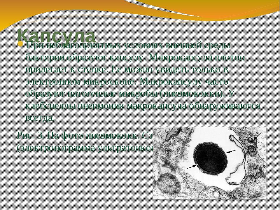 Капсула При неблагоприятных условиях внешней среды бактерии образуют капсулу....
