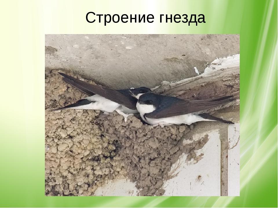 Строение гнезда