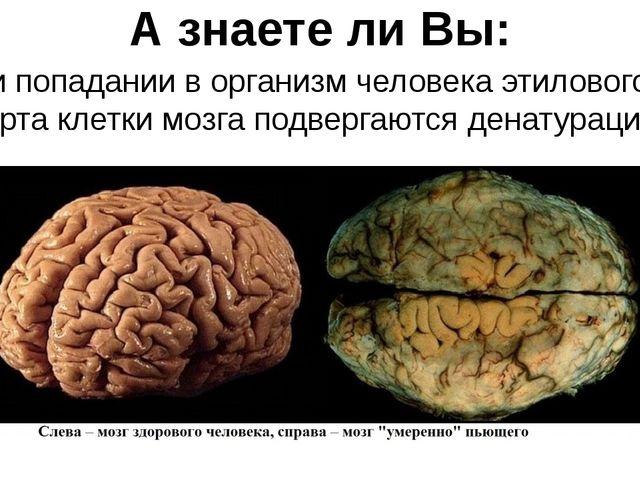 А знаете ли Вы: При попадании в организм человека этилового спирта клетки моз...