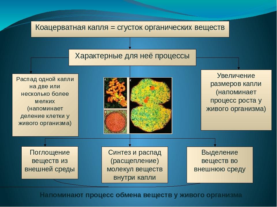 Итак, таким образом, существует пять основных гипотез происхождения жизни на...