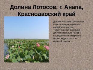 Долина Лотосов, г. Анапа, Краснодарский край Долина Лотосов - обширная планта
