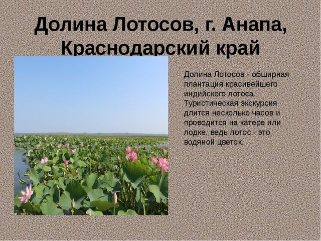 Долина Лотосов, г. Анапа, Краснодарский край Долина Лотосов - обширная планта...