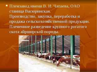 Племзавод имени В. И. Чапаева, ОАО станица Васюринская. Производство, закупка