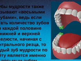 Зубы мудрости также называют «восьмыми зубами», ведь если считать количество