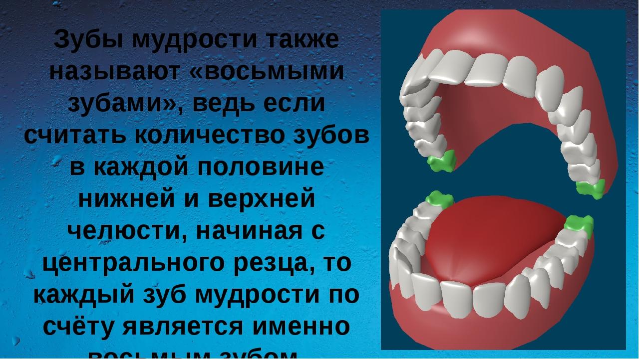 Зубы мудрости также называют «восьмыми зубами», ведь если считать количество...