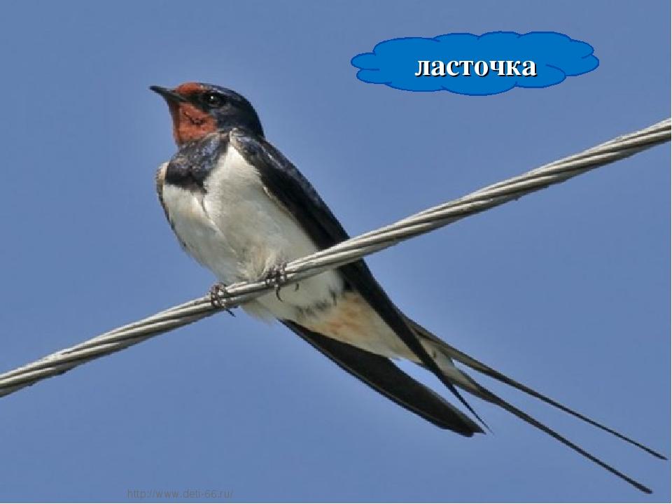 * * ласточка http://www.deti-66.ru/ http://www.deti-66.ru/