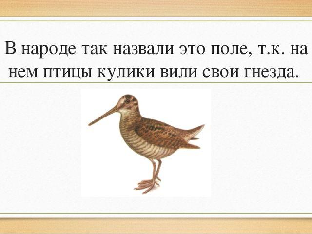 В народе так назвали это поле, т.к. на нем птицы кулики вили свои гнезда.