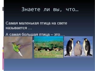 Знаете ли вы, что… Самая маленькая птица на свете называется … А самая больша
