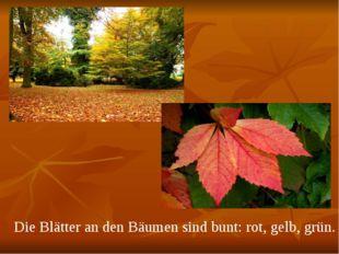 Die Blätter an den Bäumen sind bunt: rot, gelb, grün.