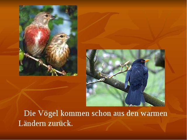 Die Vögel kommen schon aus den warmen Ländern zurück.