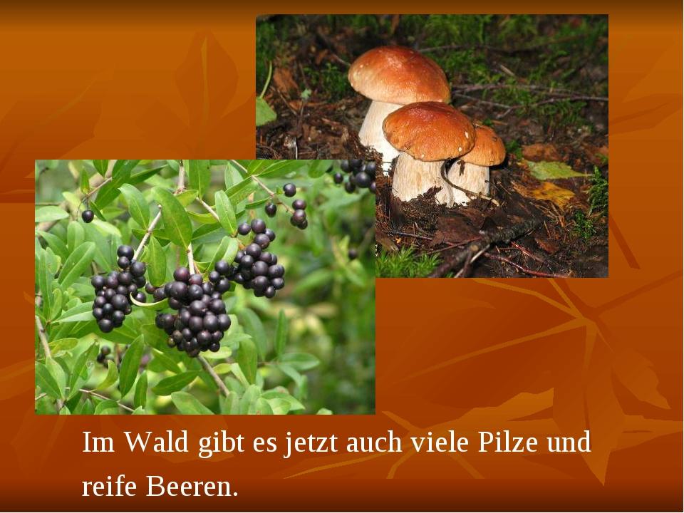 Im Wald gibt es jetzt auch viele Pilze und reife Beeren.