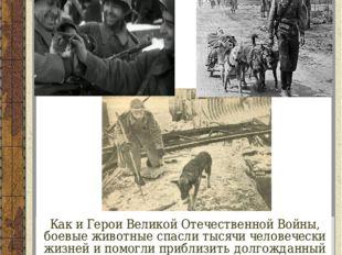 Как и Герои Великой Отечественной Войны, боевые животные спасли тысячи челове