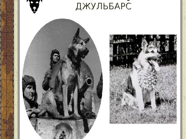 Немецкая овчарка ДЖУЛЬБАРС