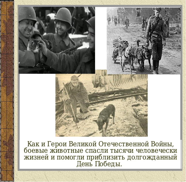 Как и Герои Великой Отечественной Войны, боевые животные спасли тысячи челове...