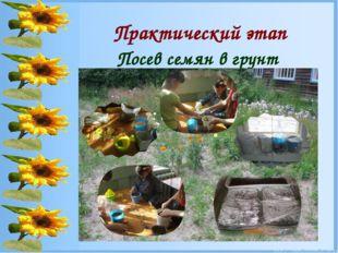 Практический этап Посев семян в грунт