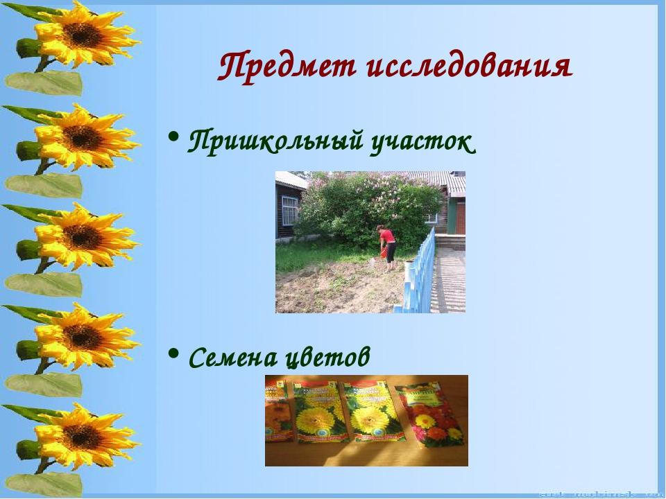 Предмет исследования Пришкольный участок Семена цветов