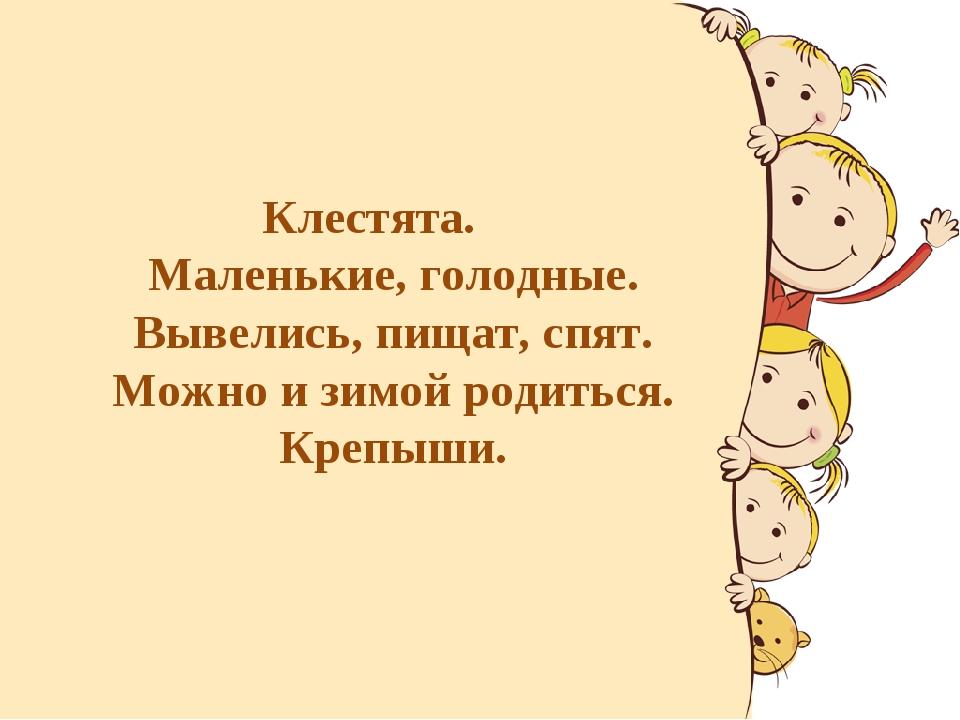 Клестята. Маленькие, голодные. Вывелись, пищат, спят. Можно и зимой родиться....