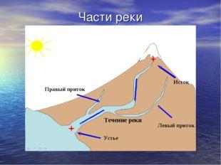 Части реки Исток Устье Левый приток Правый приток Течение реки