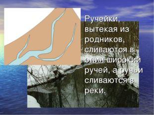 Ручейки, вытекая из родников, сливаются в один широкий ручей, а ручьи сливают