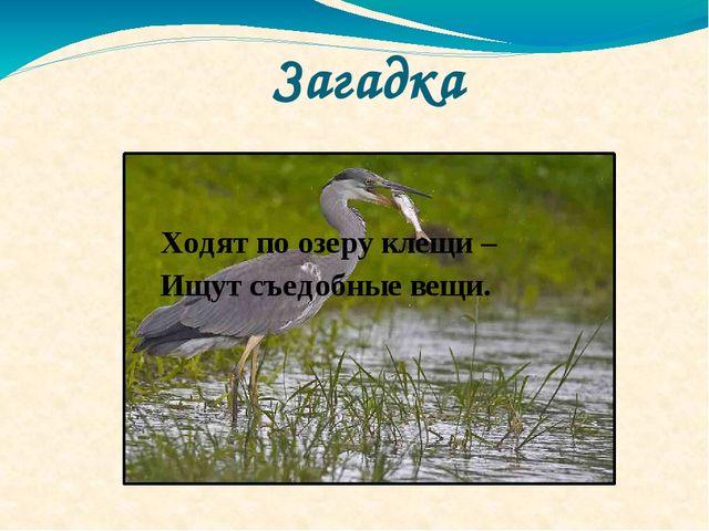 Загадка Ходят по озеру клещи – Ищут съедобные вещи.