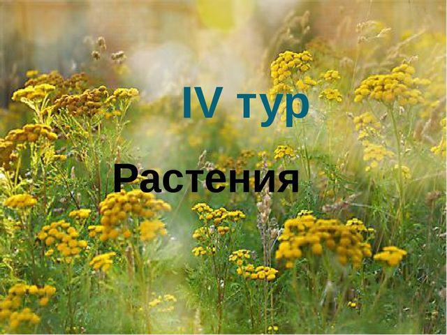 IV тур Растения