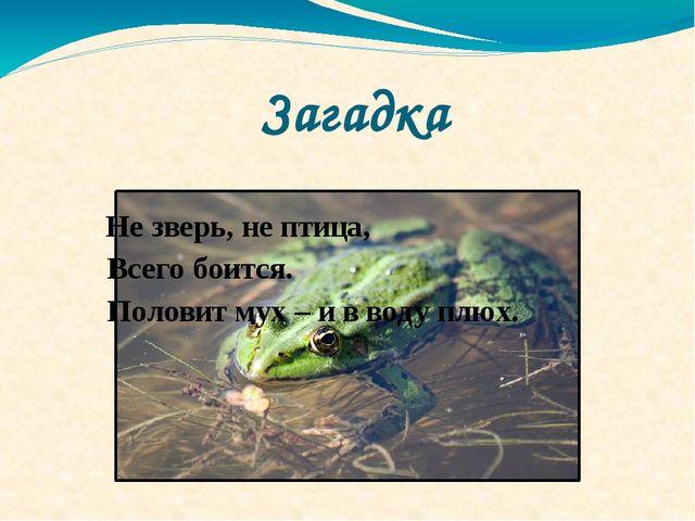 Загадка Не зверь, не птица, Всего боится. Половит мух – и в воду плюх.