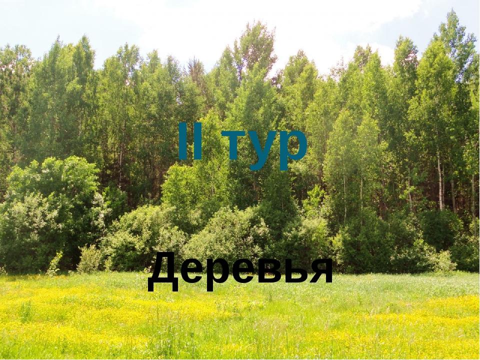 II тур Деревья