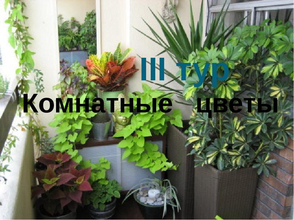 Зимний сад на балконе лоджии. - наши работы - каталог статей.
