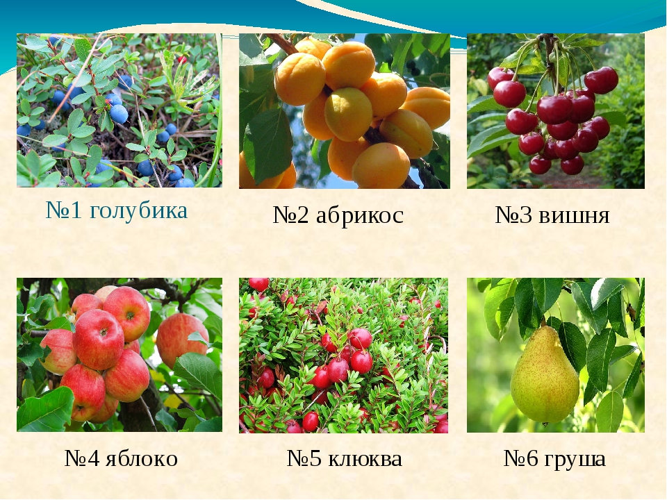 №1 голубика №4 яблоко №2 абрикос №3 вишня №5 клюква №6 груша