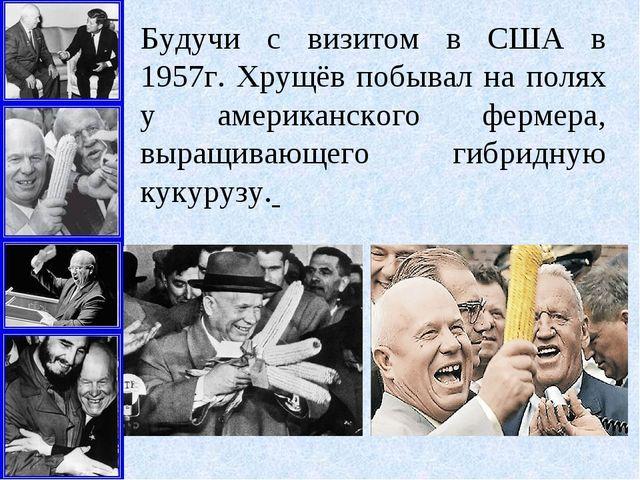 Будучи с визитом в США в 1957г. Хрущёв побывал на полях у американского ферме...