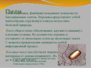 Пили Пили (ворсинки, фимбрии) покрывают поверхность бактериальных клеток. Вор