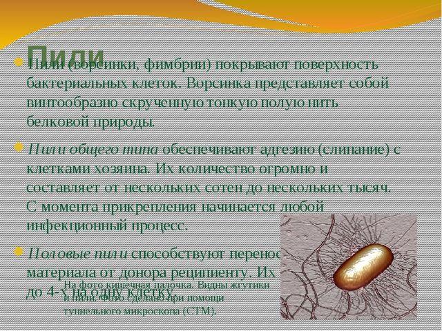 Пили Пили (ворсинки, фимбрии) покрывают поверхность бактериальных клеток. Вор...
